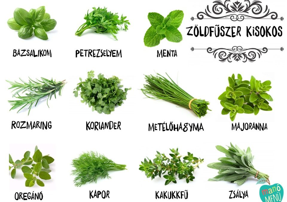 Zöldfűszerek a konyhában